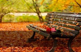 秋季落叶暖色背景ppt模板
