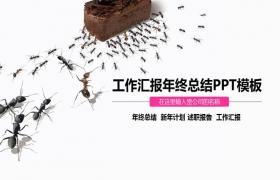 Ant团队协作背景下的工作报告PPT模板下载